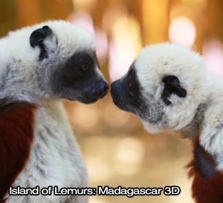 Island of Lemurs: Madagascar 3D IMAX - Image 1
