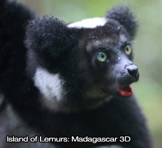 Island of Lemurs: Madagascar 3D IMAX - Image 2