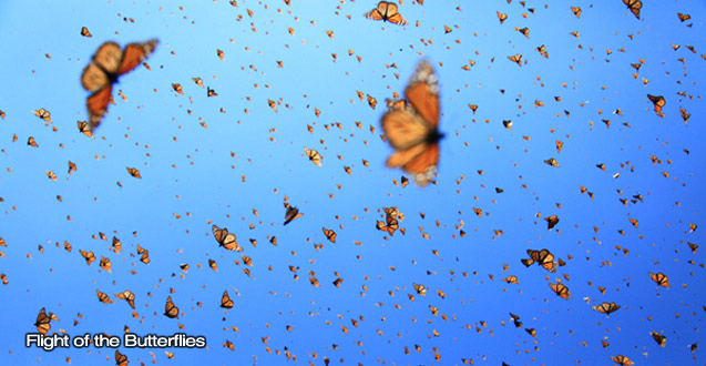 Flight of the Butterflies - Image 1